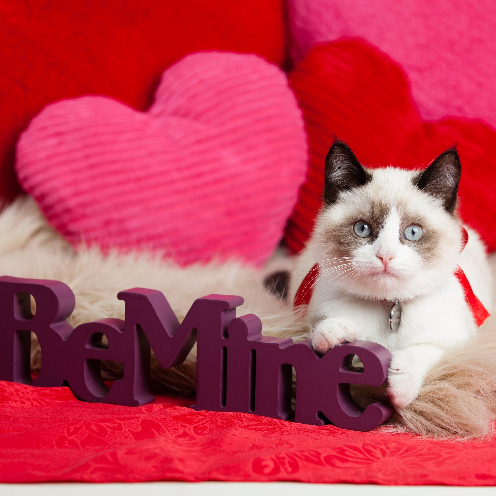 Valentine Animal Wallpaper
