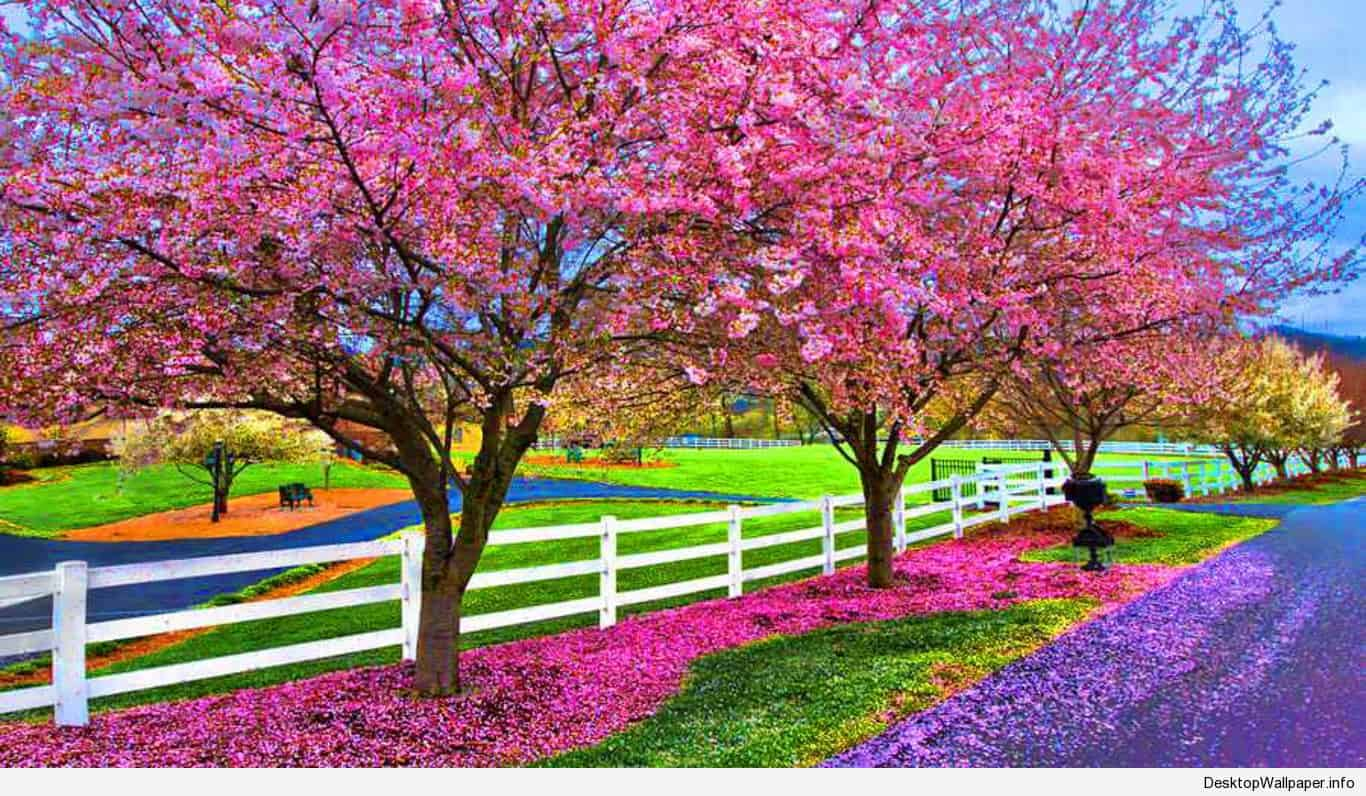 Desktop Wallpaper Spring Season   Beautiful Nature Spring Hd 1366x796