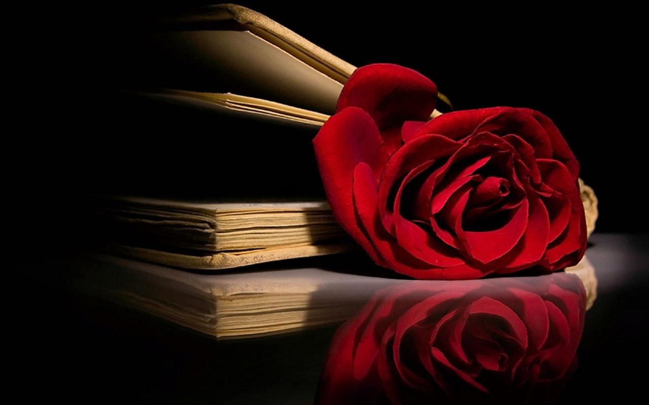 45 Red Rose Wallpaper For Facebook On Wallpapersafari