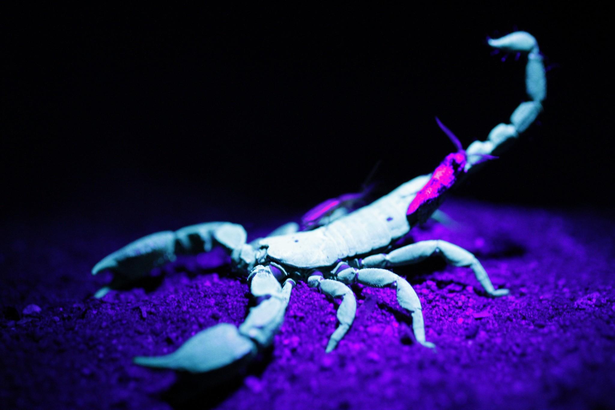 Scorpion Wallpapers 2048x1365
