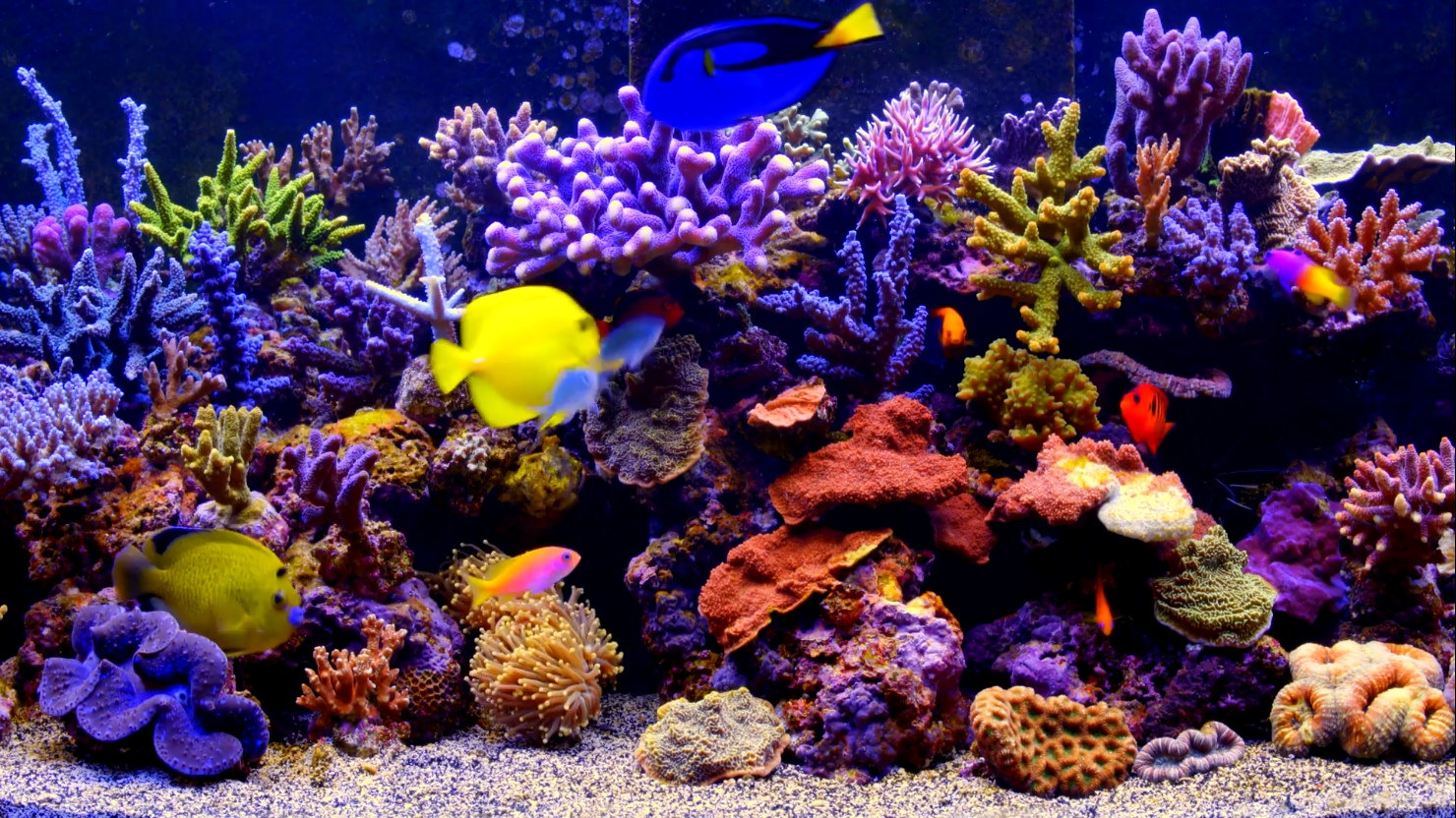 Aquarium Live Wallpaper by SmithJerry 1480x832