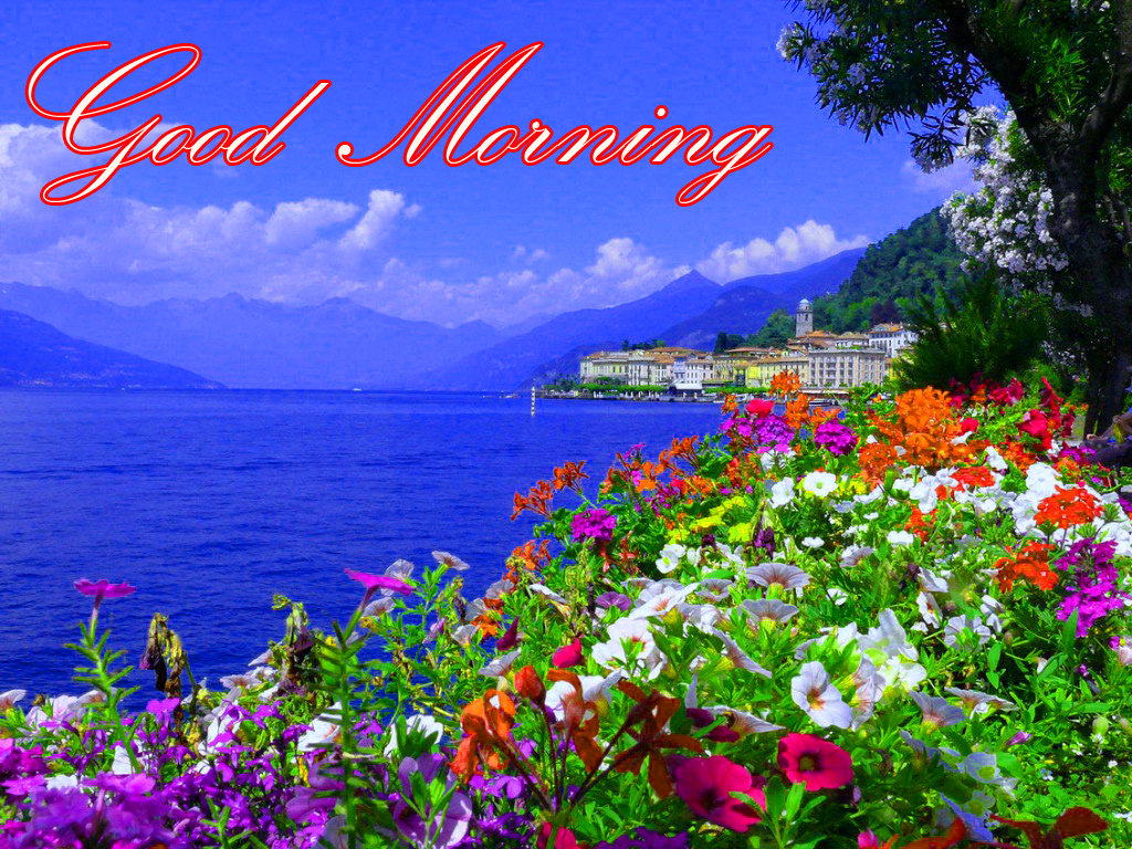 Free Download Latest Good Morning Images Wallpaper Photo Pics Hd