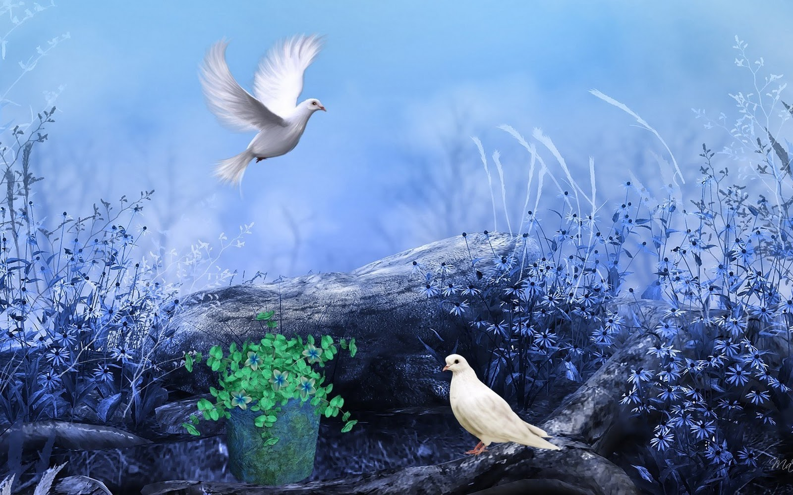 Pigeons Nature Flowers Colors Paint HD Wallpapers Love Wallpapers 1600x1000