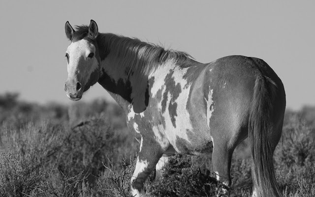 Black and White Wallpapers Animals 640x400