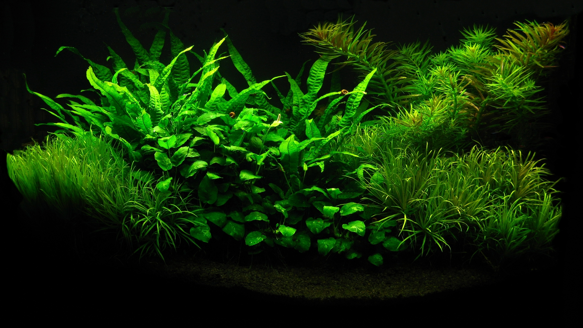 47 Hd Aquarium Wallpaper On Wallpapersafari