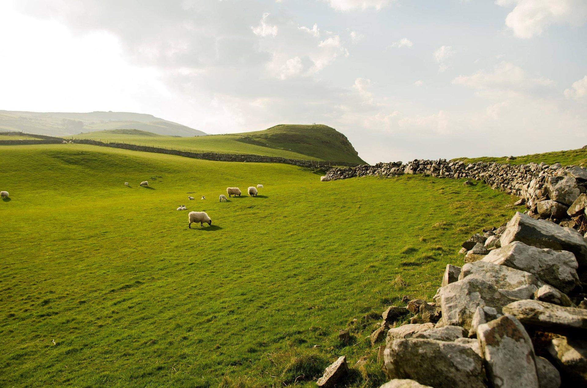 northern ireland sky grass sheep stones northern ireland 1920x1271
