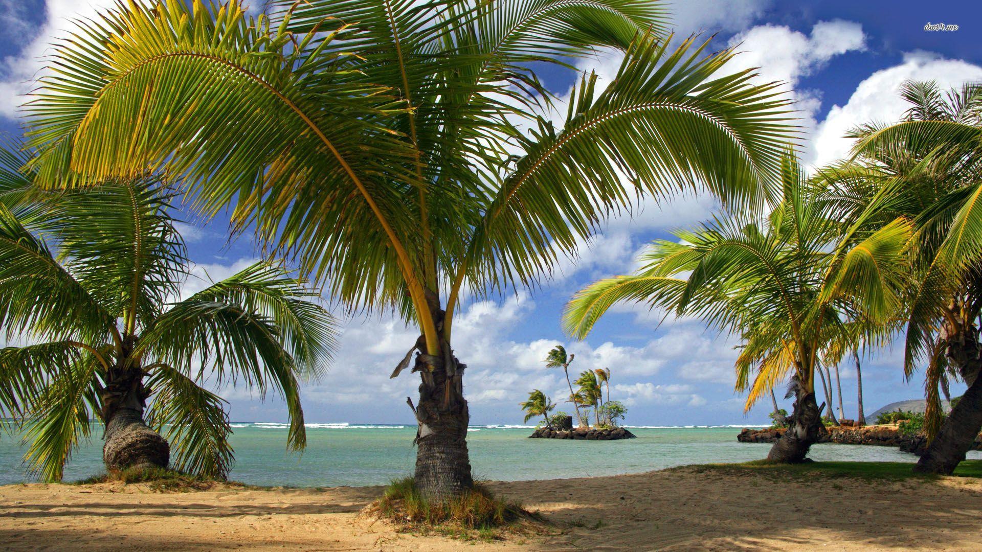 Palm trees wallpaper 1280x800 Palm trees wallpaper 1366x768 Palm trees 1920x1080