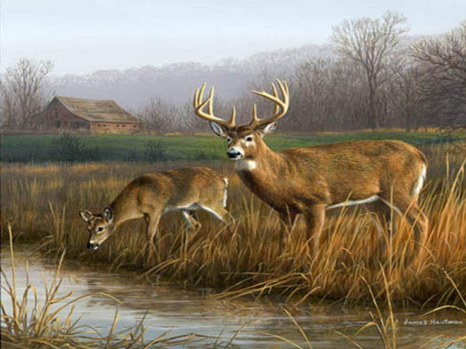 Whitetail Deer Backgrounds 1600x1200