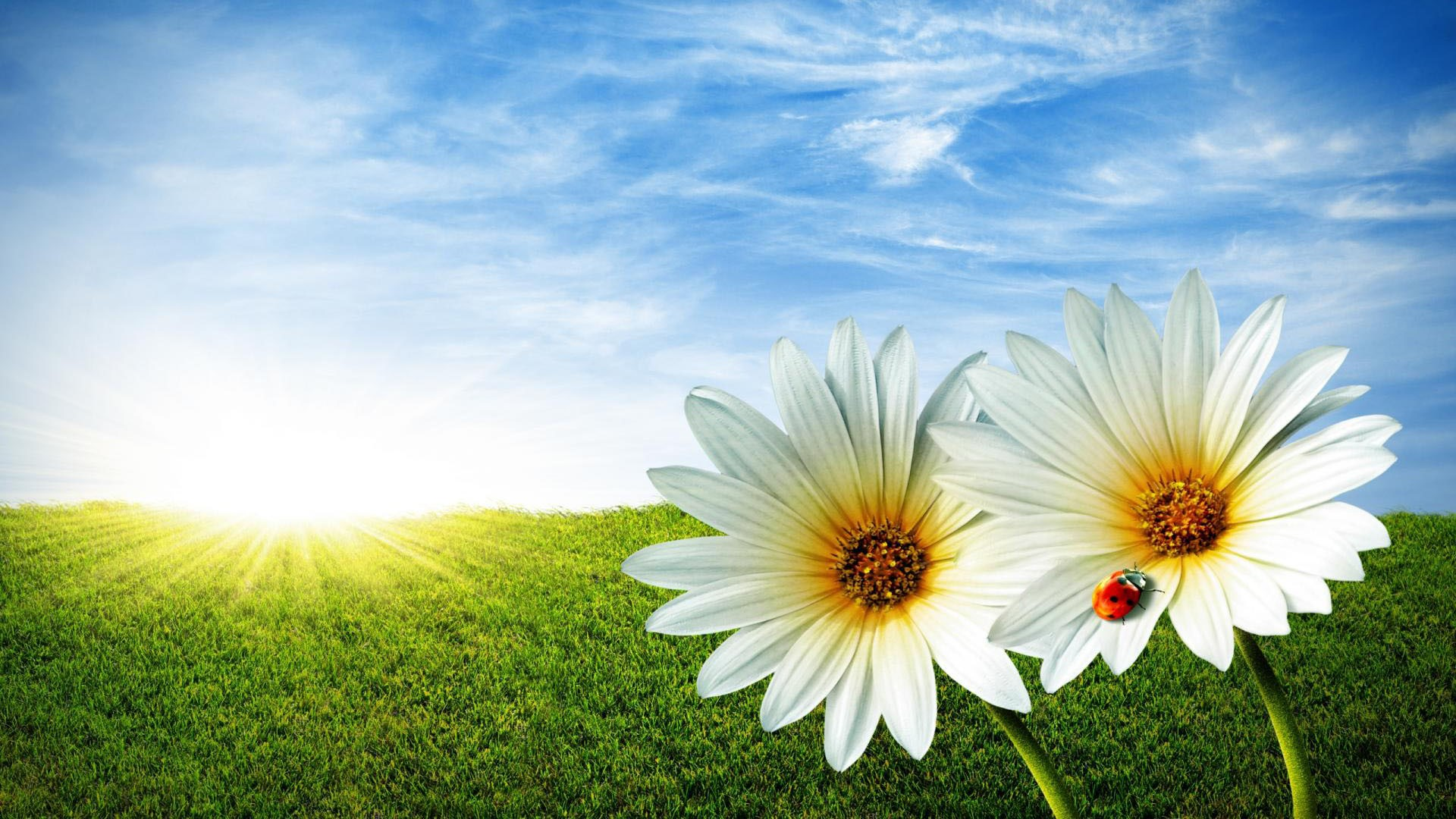 Free Download 1080p Nature Wallpapers For Desktop Hd Desktop