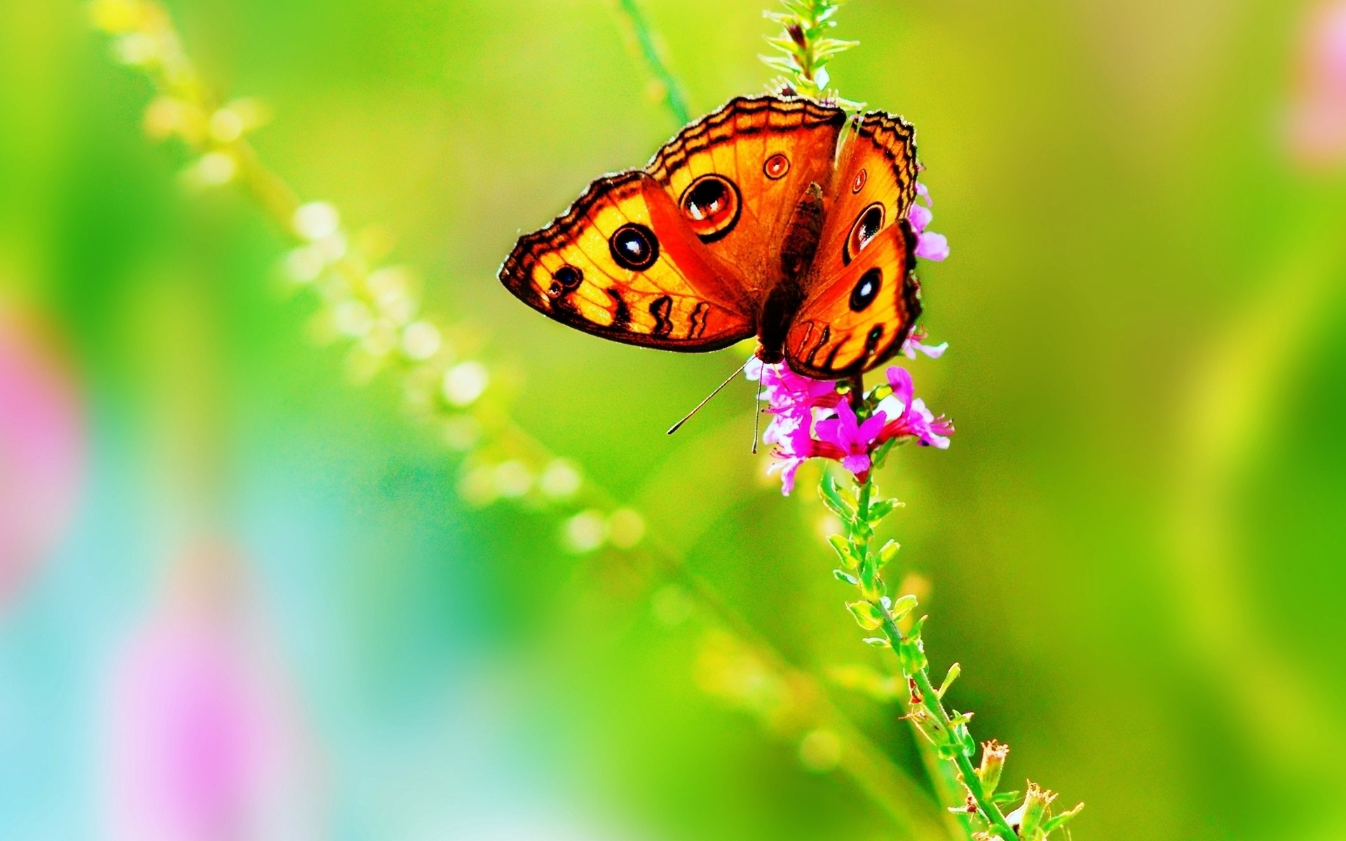 Bright Colorful Butterfly Wallpaper   Wallpaper 37385 1920x1200