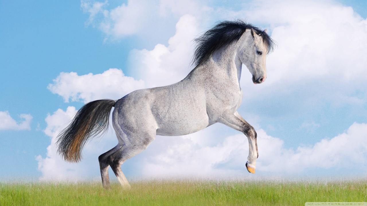 Horse Running Hd High Definition Fullscreen Lovers 236533 1280720 1280x720