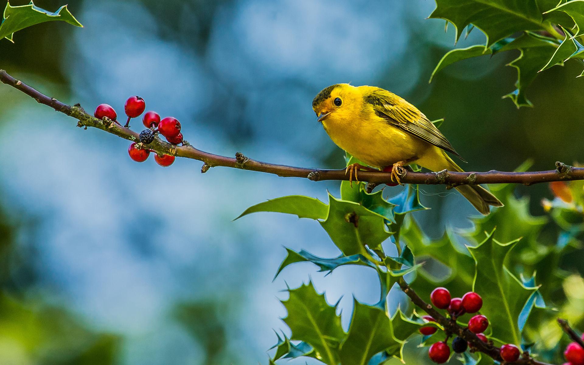 Cute bird wallpaper 19345 - Birds photo - Animal
