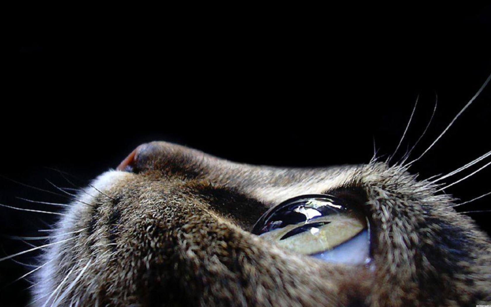 Cat Eye Wallpaper   Eyes Wallpaper 28331369 1680x1050