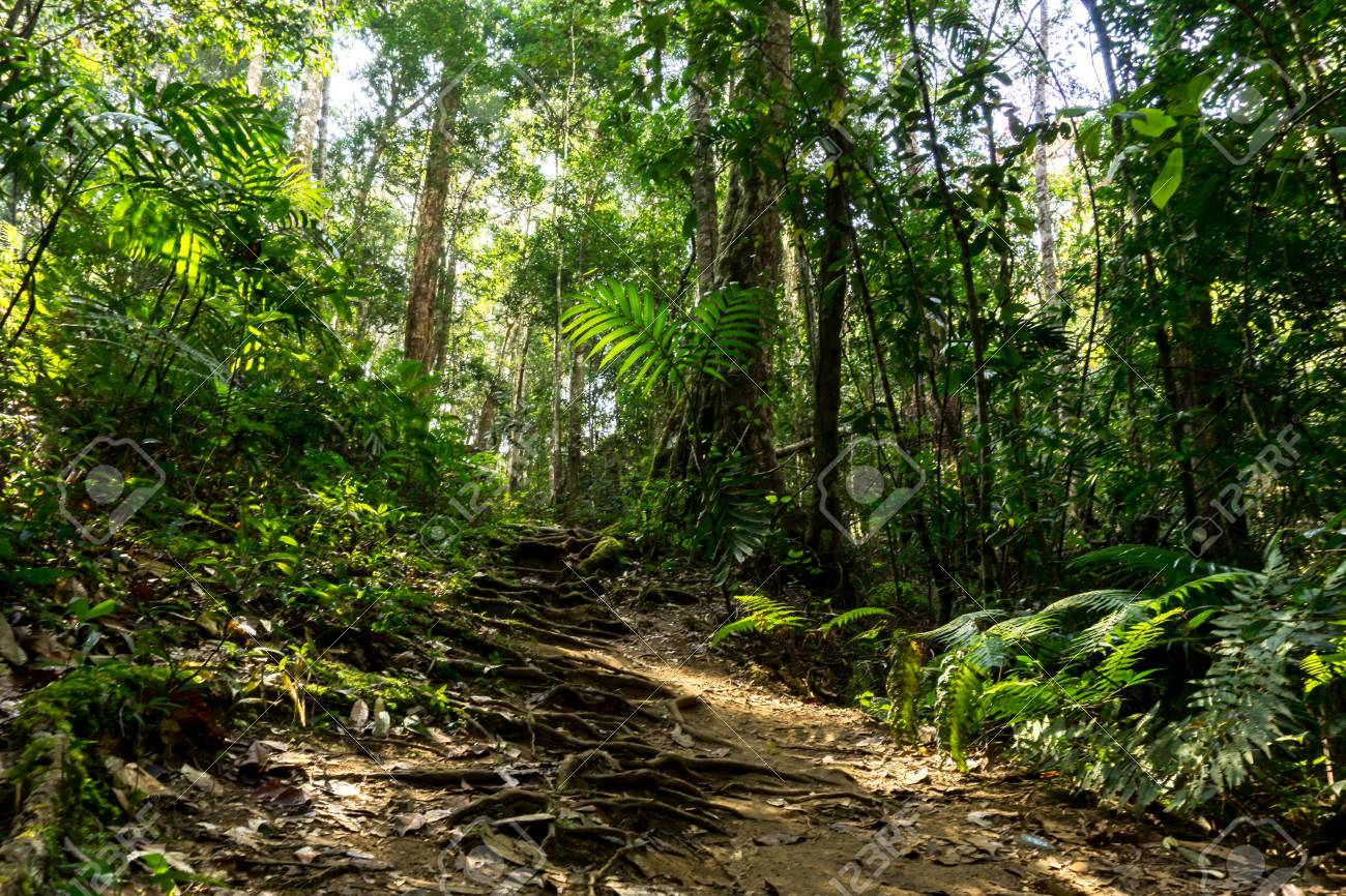 Background Of Rainforest Path In Jungle Tropical Trail Stock Photo 1300x866