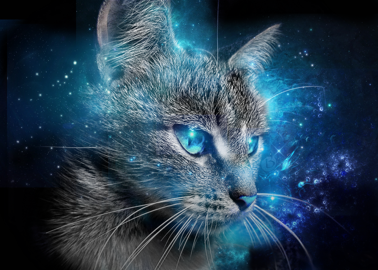 Cat Blue Eyes Wallpaper 2015 by Badr DS 1279x914