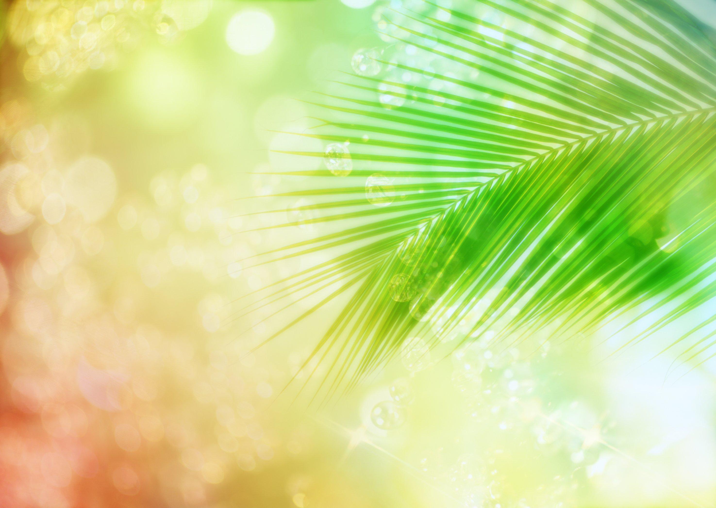 Sunkissed Palm Leaf wallpaper   ForWallpapercom 2950x2094