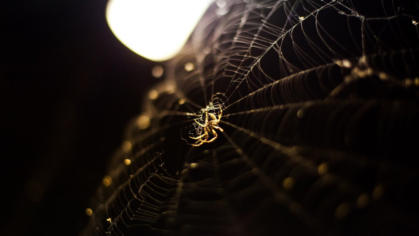 Download Spider on a web wallpaper 1366x768