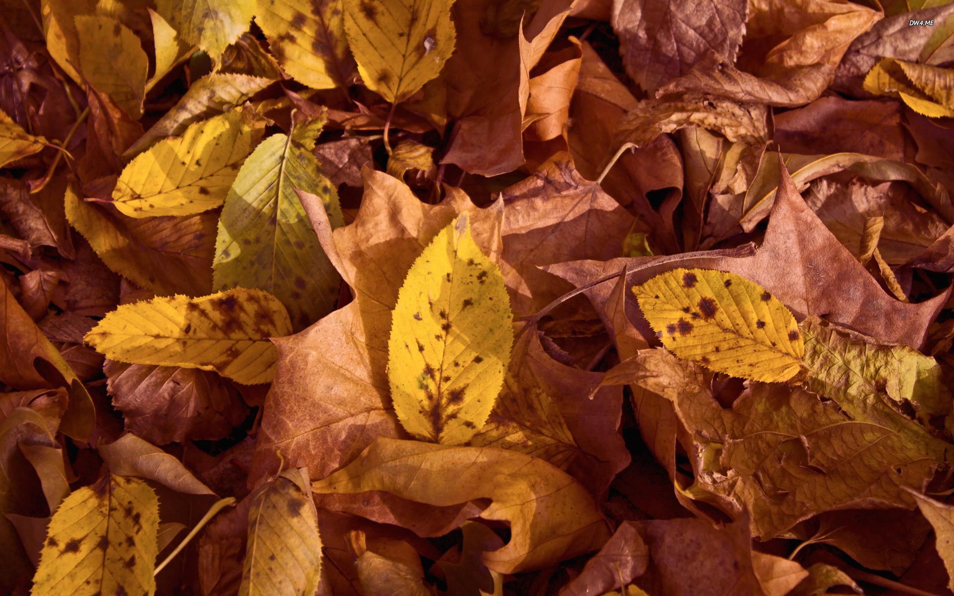 Autumn Country Desktop Wallpaper wallpaper wallpaper hd background 1920x1200