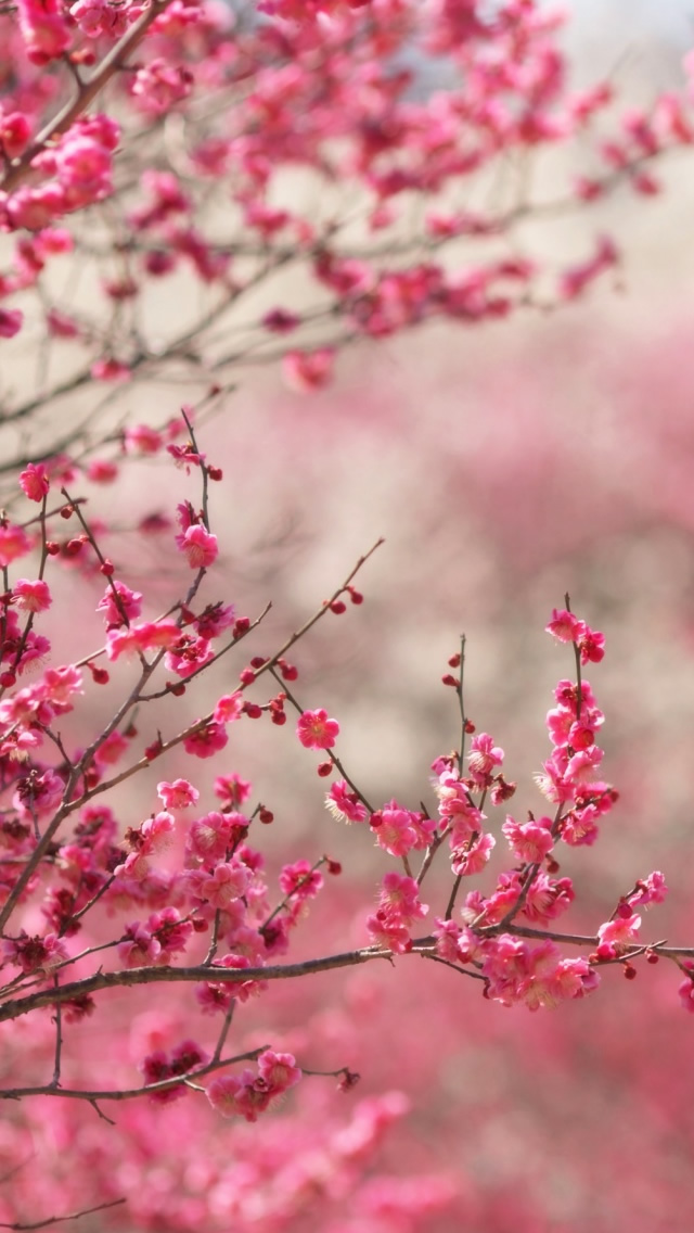 spring iphone 5c wallpaper
