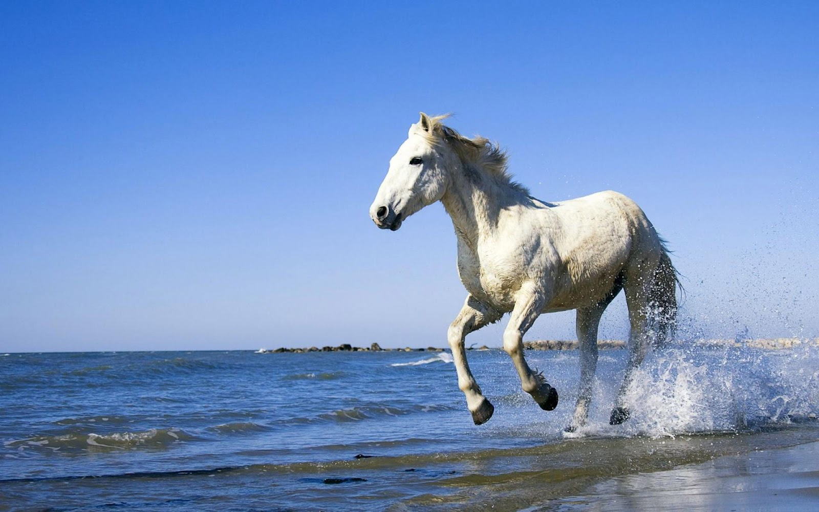 Image Result For Running Horse Wallpapersa