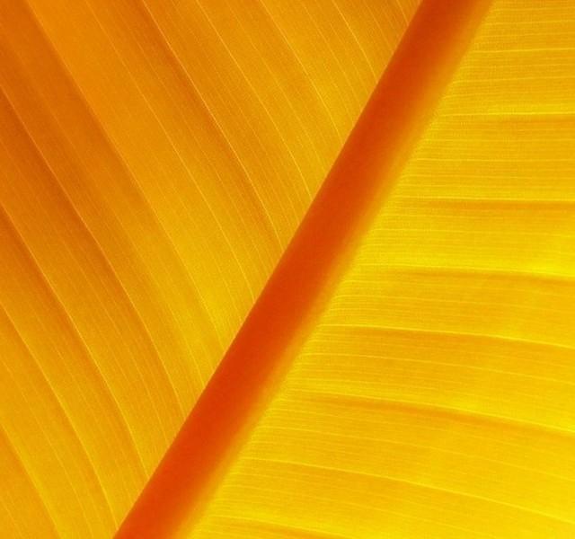 artistic iphone retina wallpapers ios wallpapers55com   Best 640x600