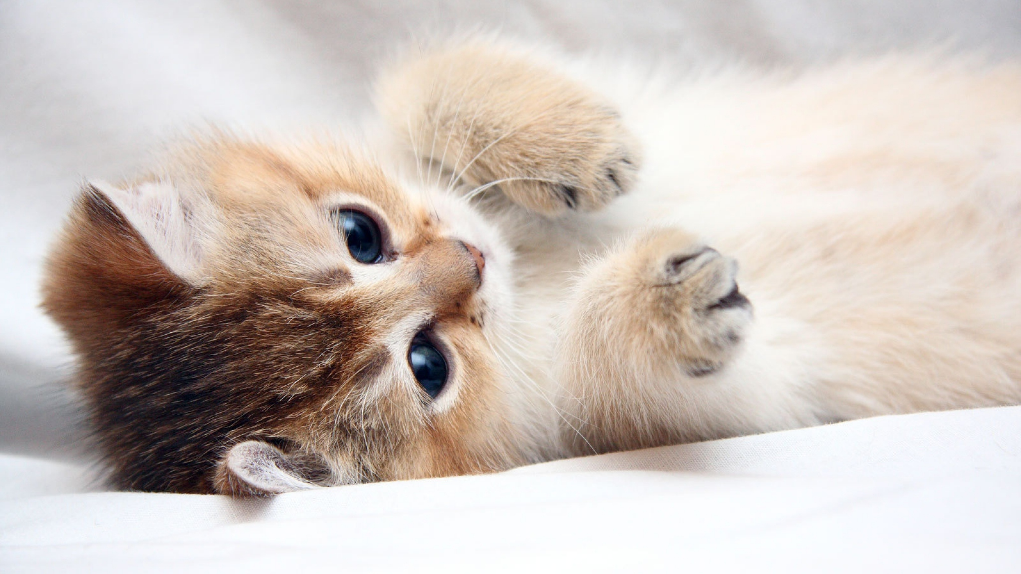 Download Wallpaper 2048x1152 Cat Kitten Cute Foot Face HD HD 2048x1152