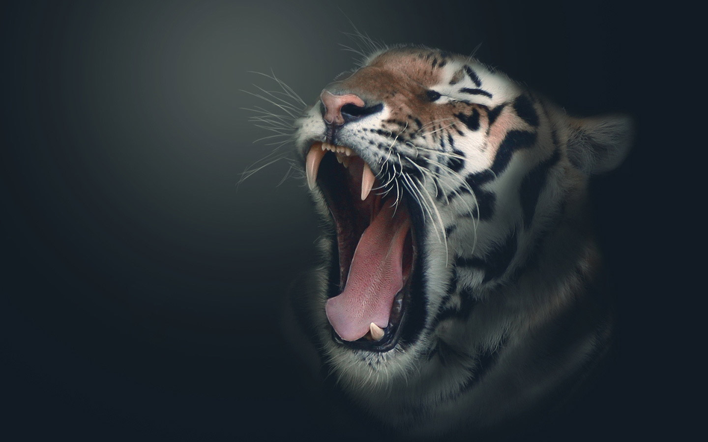 HD Tiger Wallpaper Widescreen - WallpaperSafari