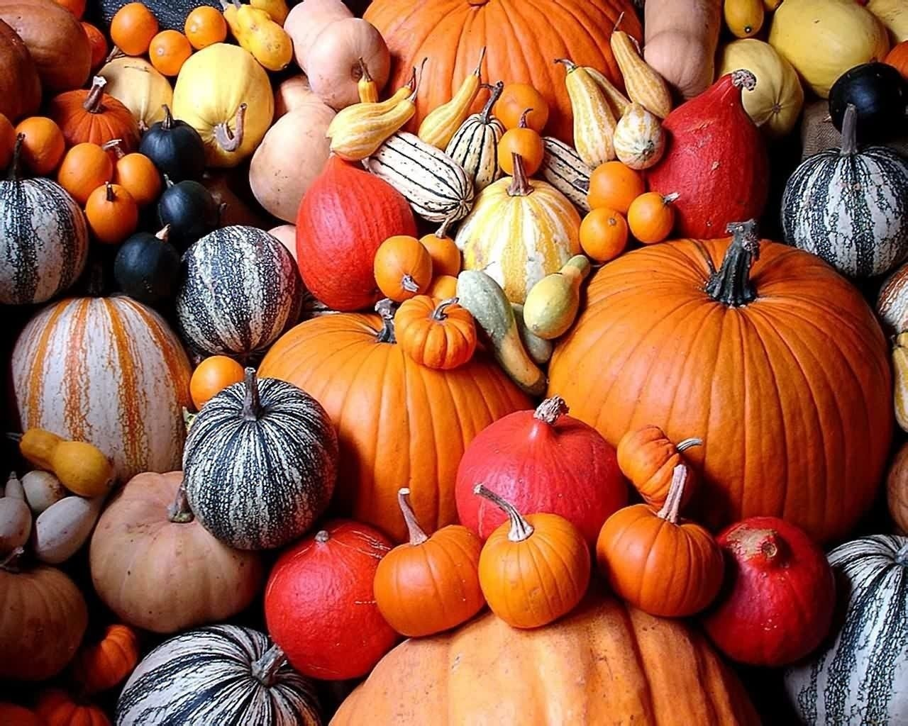 47 Pumpkin HD Wallpapers Background Images 1280x1024