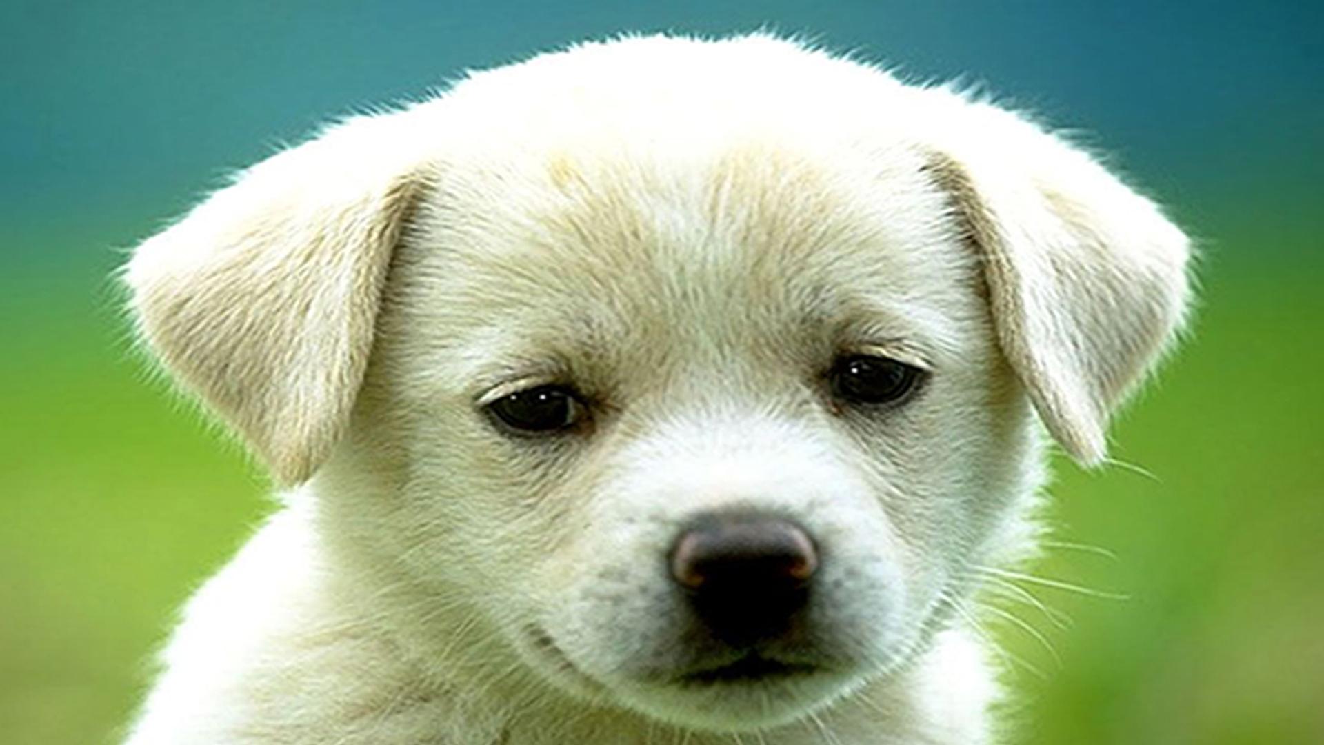 dog puppy desktop 1920x1080 dog puppy desktop 1920x1080 wallpaper 1920x1080