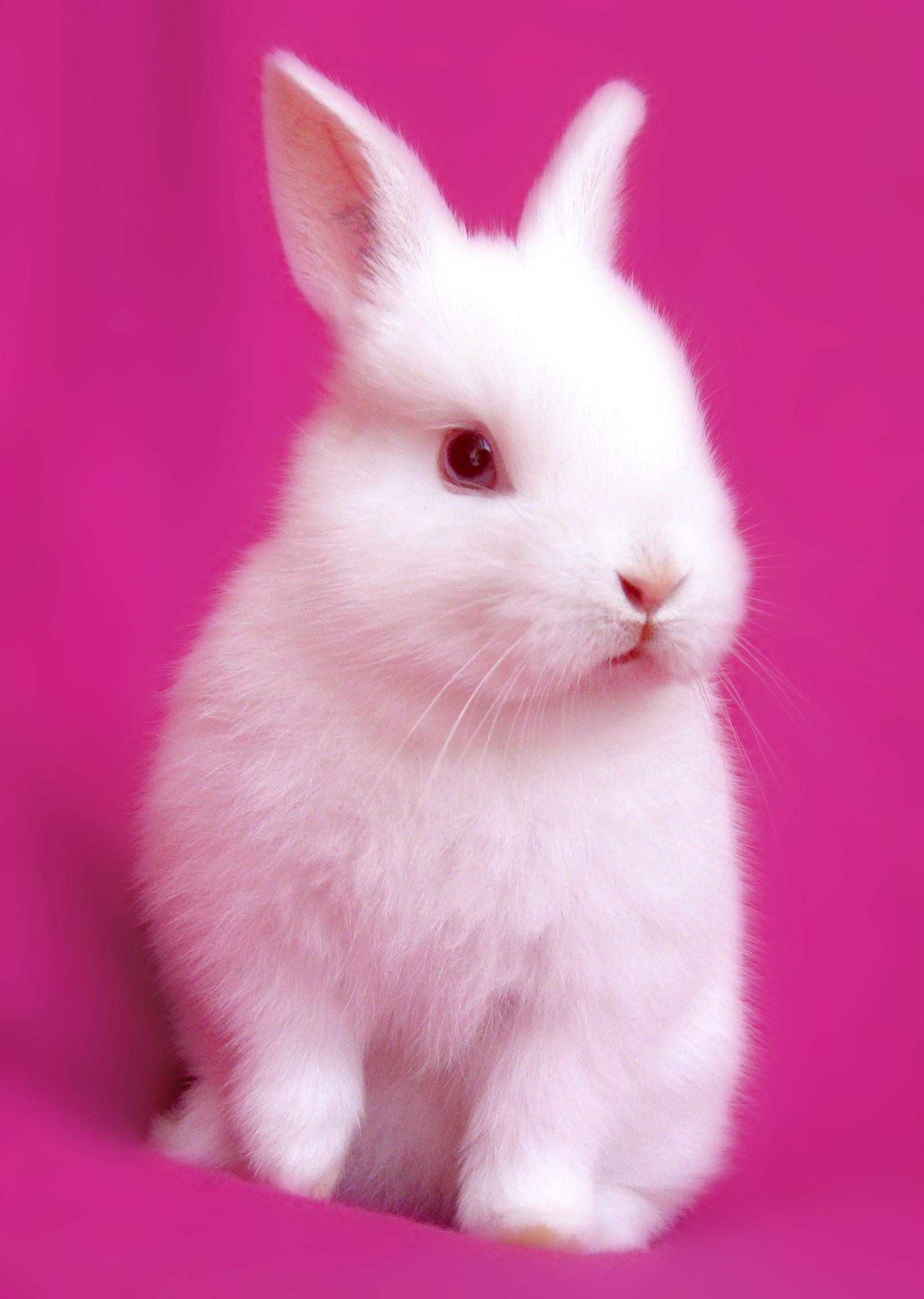 Pink Bunny Wallpapersafari