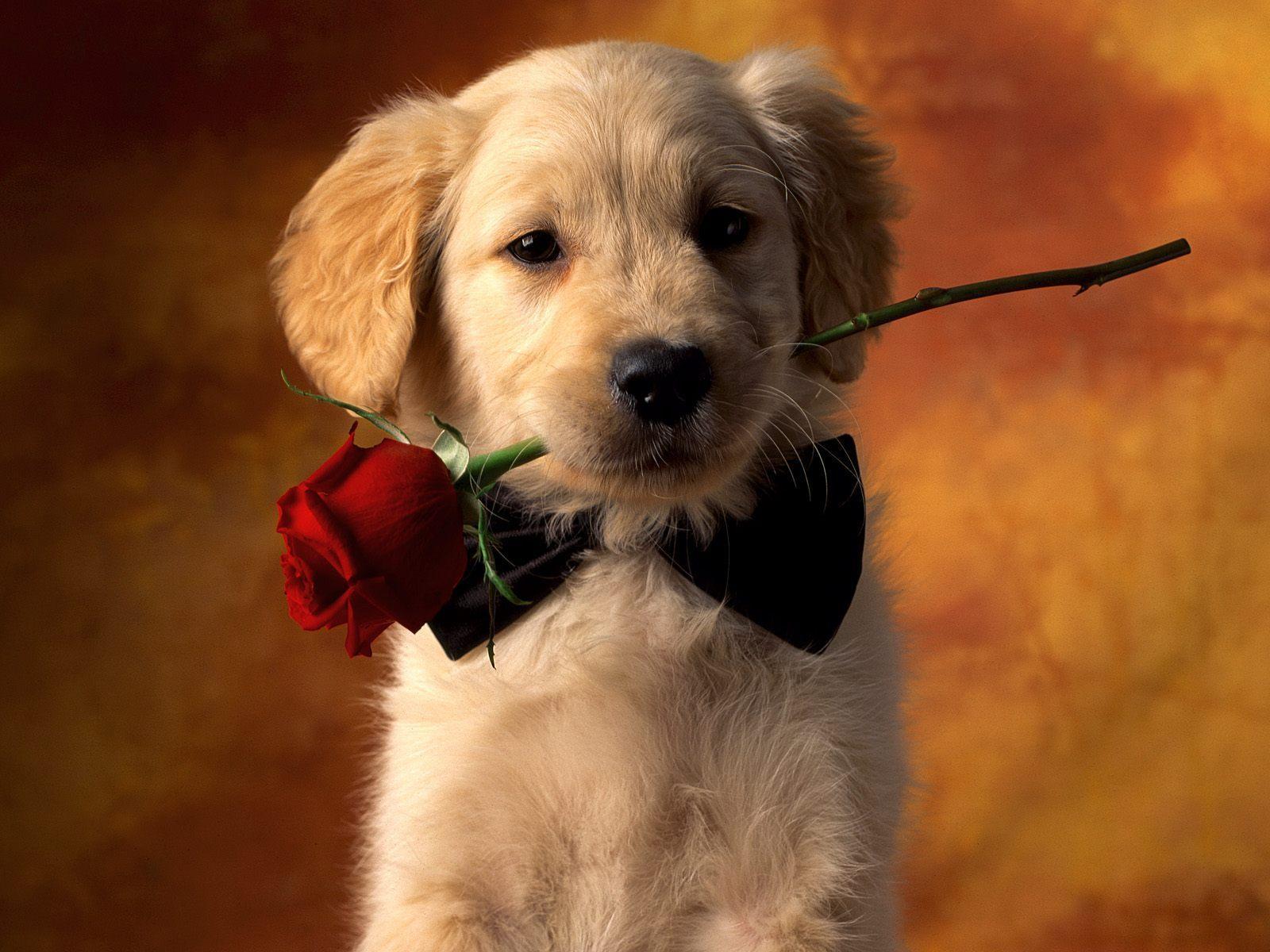 Puppy Love   Puppies Wallpaper 9460996 1600x1200