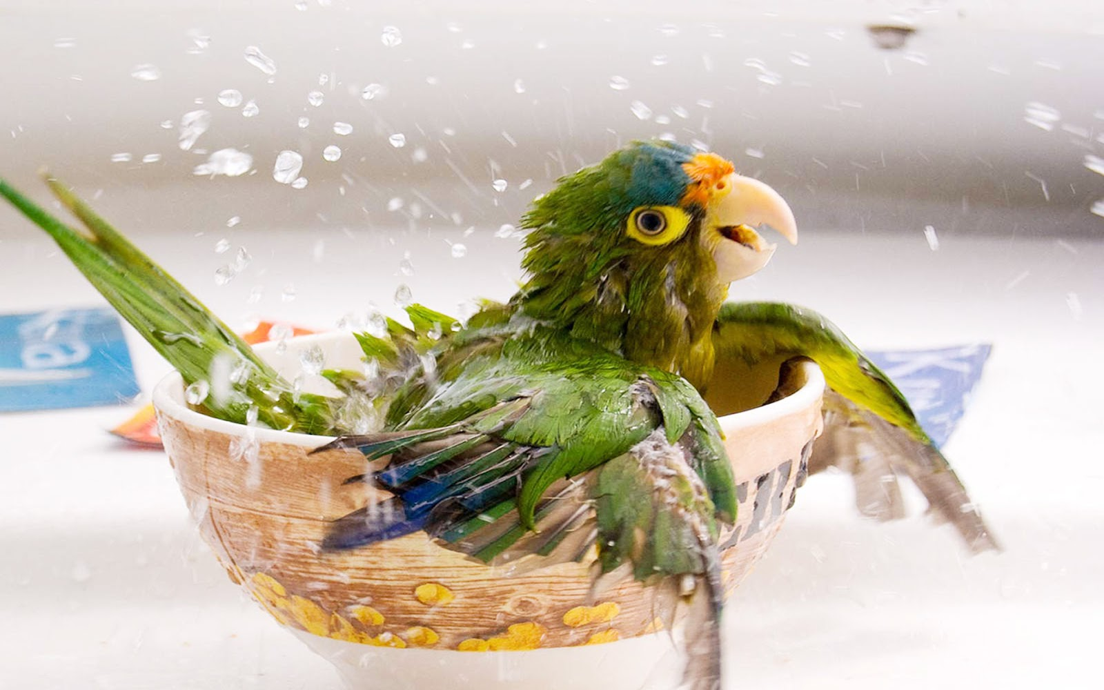 Lovely Wallpapers Little Cute Animals Wallpapers 2013 1600x1000