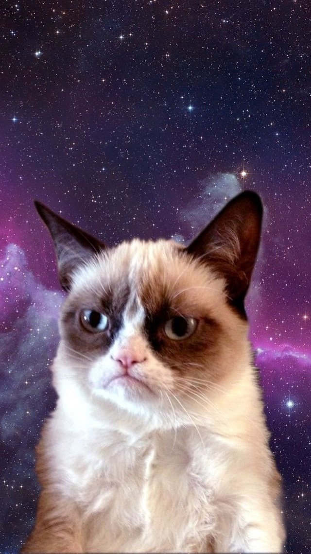 Grumpy Cat in Space 30 Pretty iPhone Wallpapers That Dont Cost a 640x1140