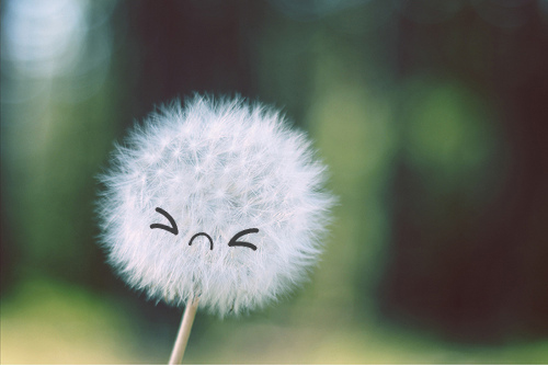 dandelion face emoticon reaction face image smiley seed head wind blow 500x333