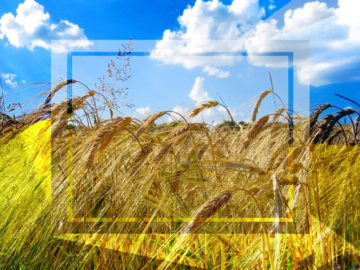 Download picture Wallpaper desktop Ukraine rye field with 1200x900