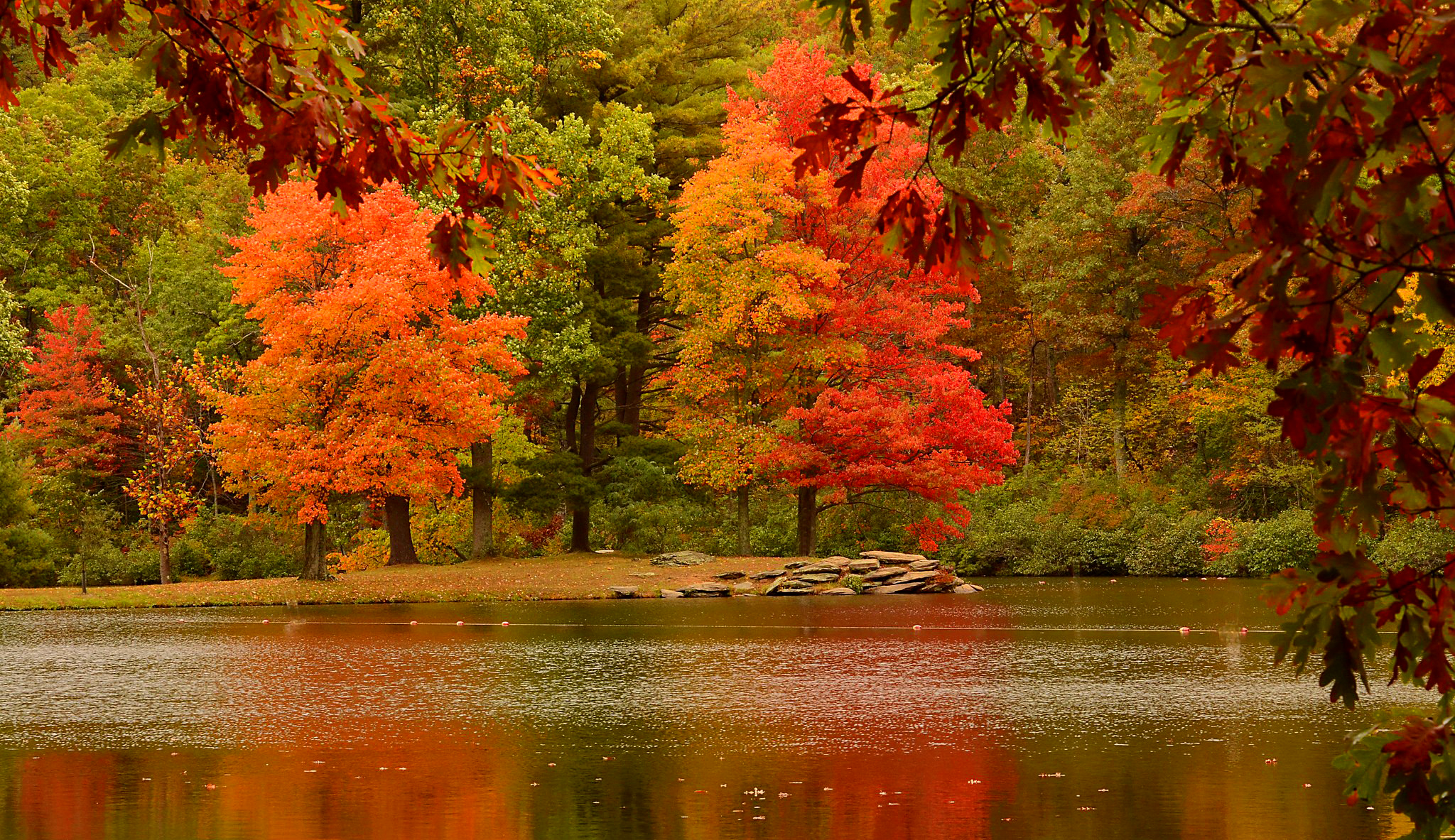 Reflections Of Autumn Trees Nature Fall Hd Wallpaper 2048x1183