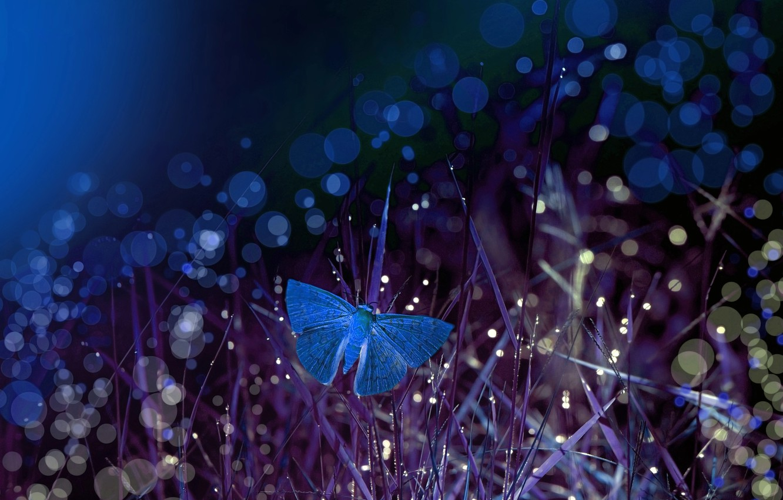 Wallpaper grass macro night butterfly bokeh Eleonora Di Primo 1332x850