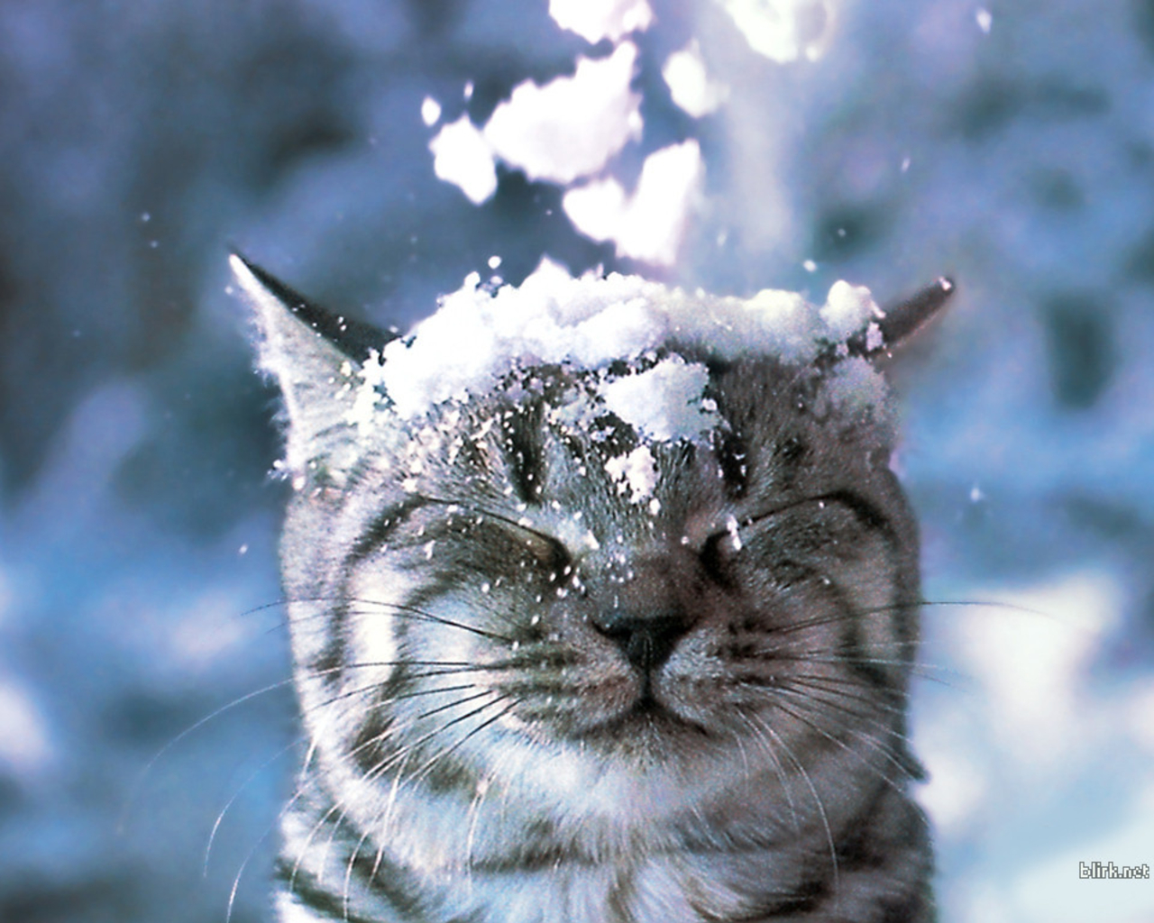 Cats images Cat in the Snow Wallpaper wallpaper photos 28363007 1280x1024