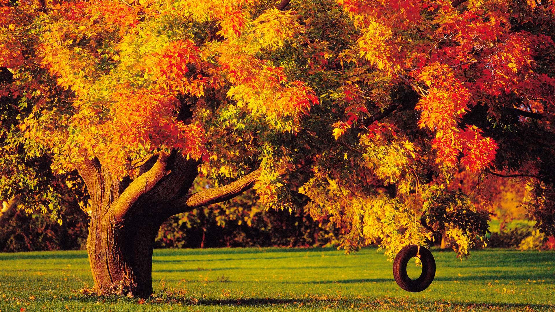 Autumn Trees wallpaper   690569 1920x1080