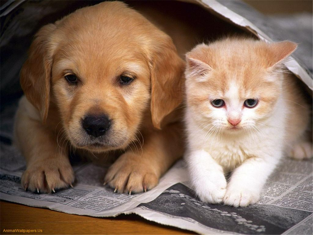 Cute Baby Kittens And Puppies 11233 Hd Wallpapers in Animals 1024x768