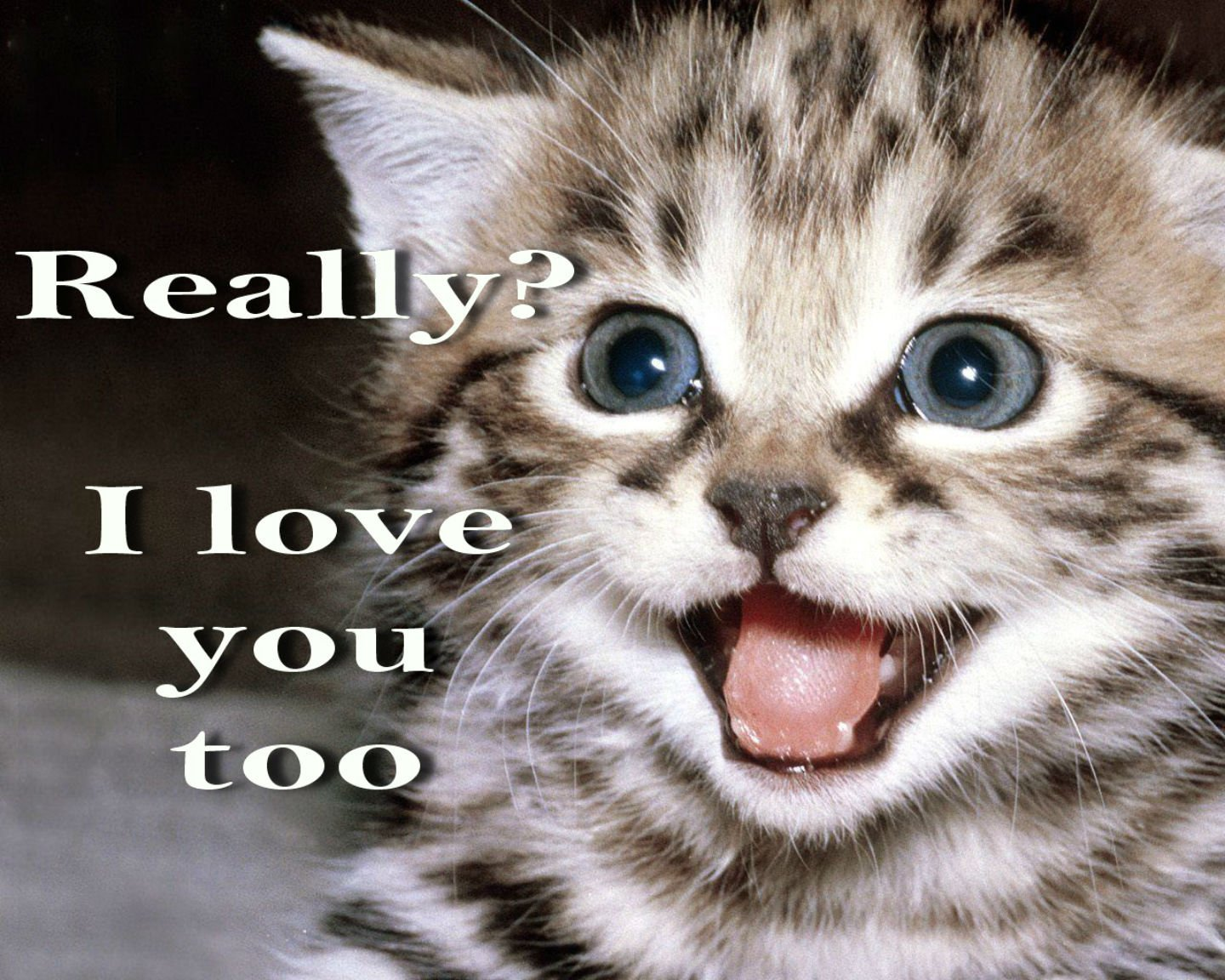 meme quote funny humor grumpy kitten mood love wallpaper background 1440x1152