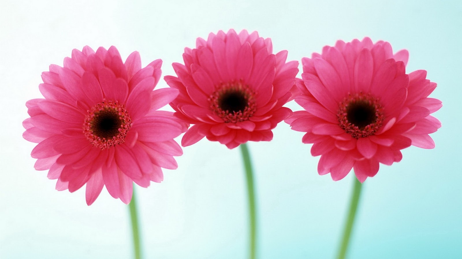 Flowers For Flower Lovers HD Wallpapers 1600x900