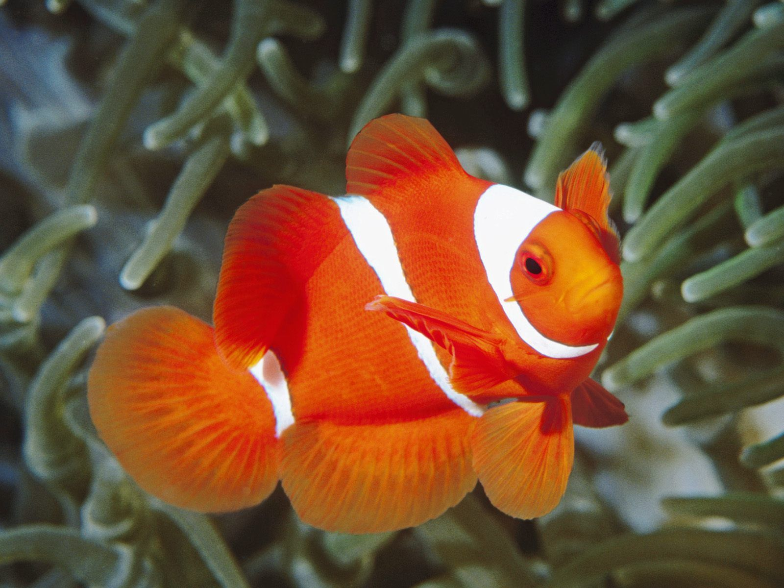 Fish Wallpaper - WallpaperSafari