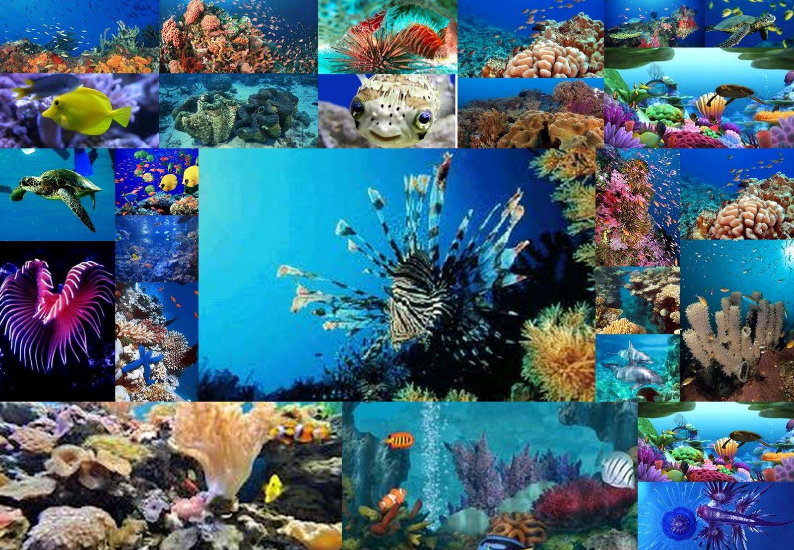 Marine Biology Background Biologist marine biology 1600x1108