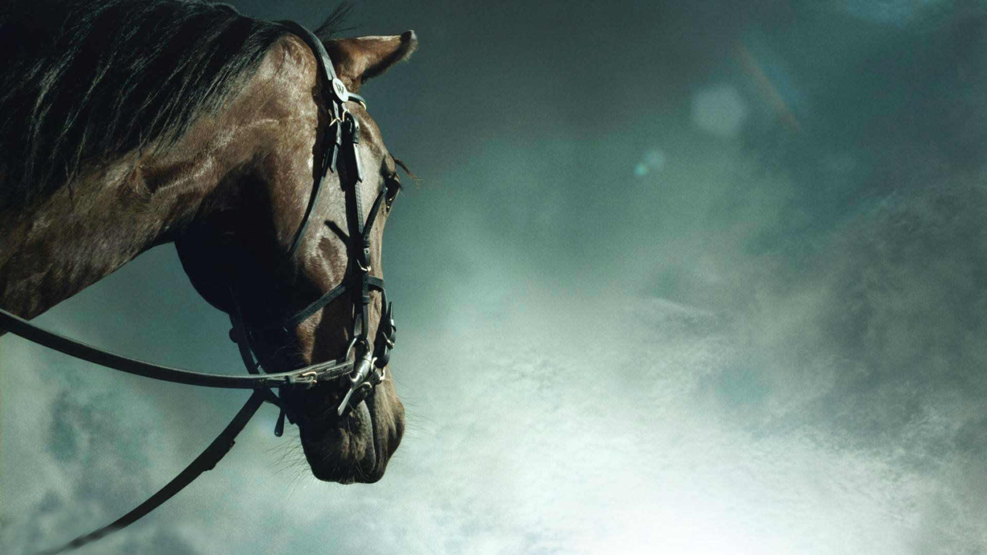 44 Animals Horse Wallpapers Download 1920x1080