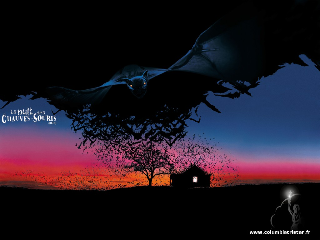 Bats   Horror Movies Wallpaper 77479 1024x768