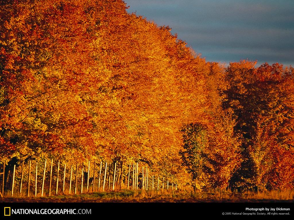 Michigan Fox River Autumn 1996 Photo of the Day Picture 1024x768