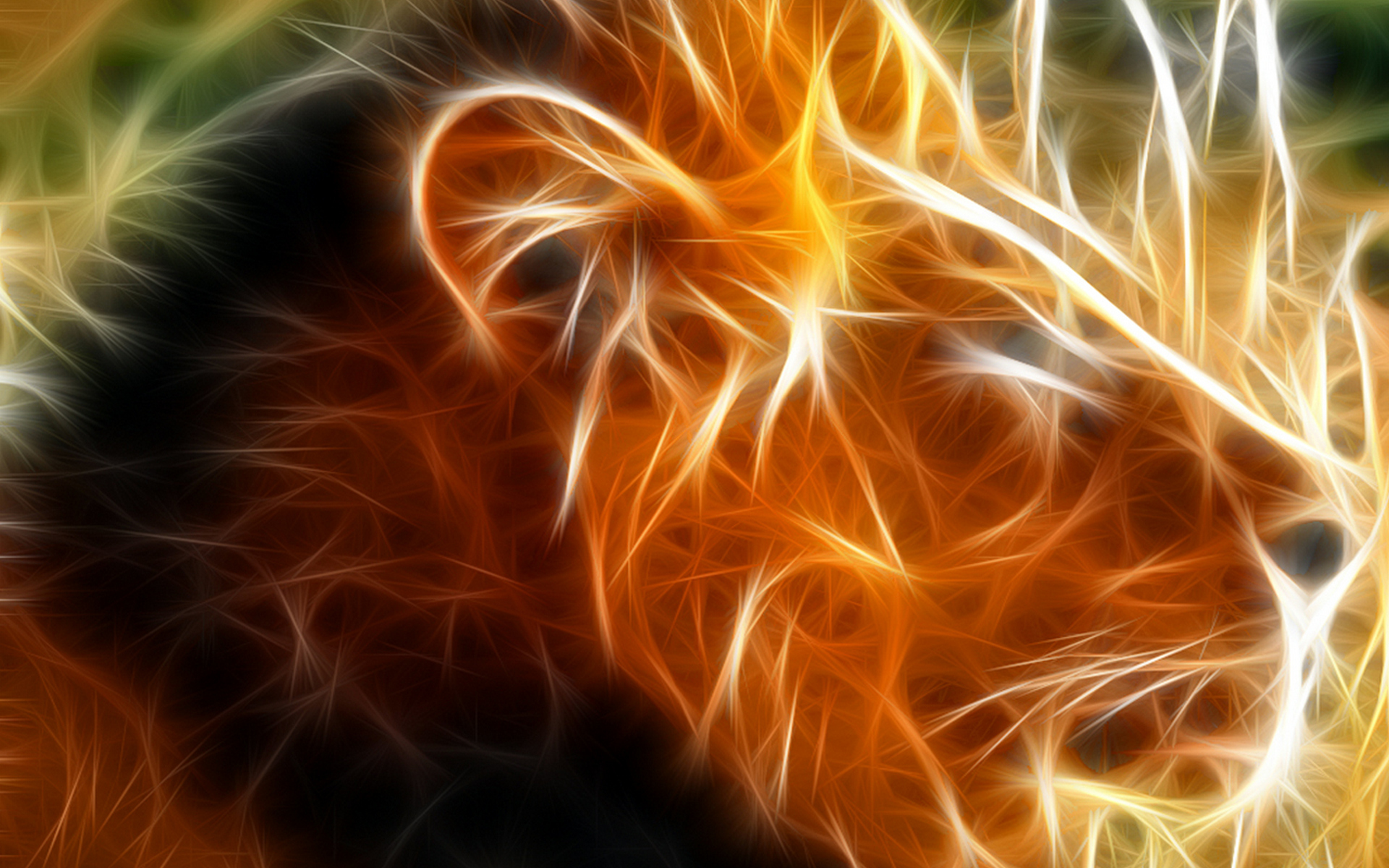 3d Cool Lion HD Wallpaper 2881 Wallpaper computer best website 1920x1200