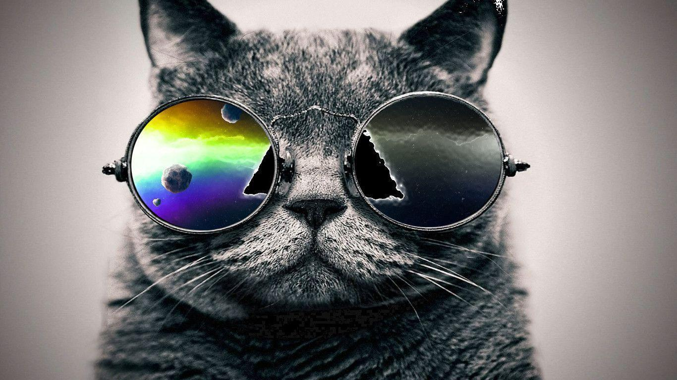 Cool Cat Backgrounds 1366x768