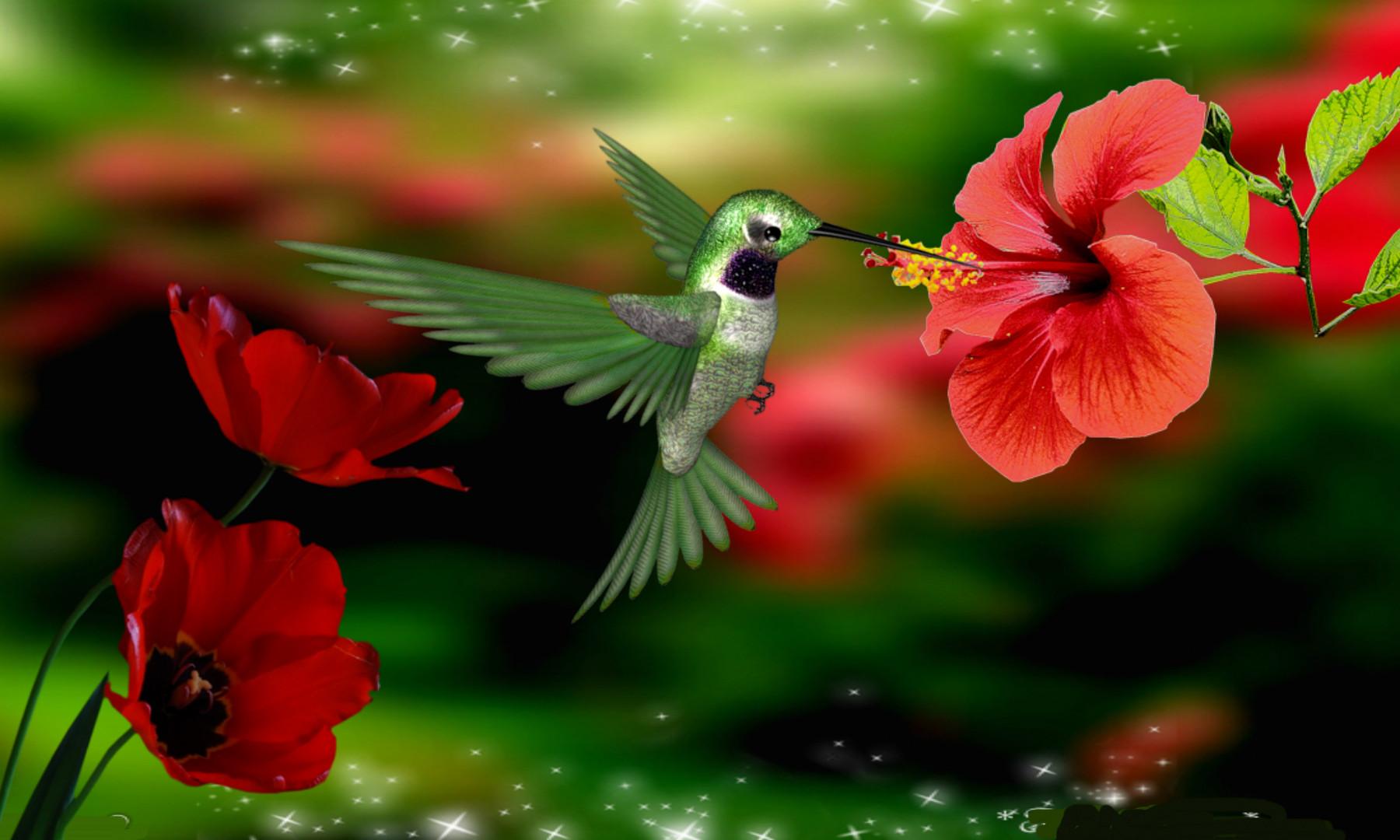 Калибри на цветке  № 2039335 без смс